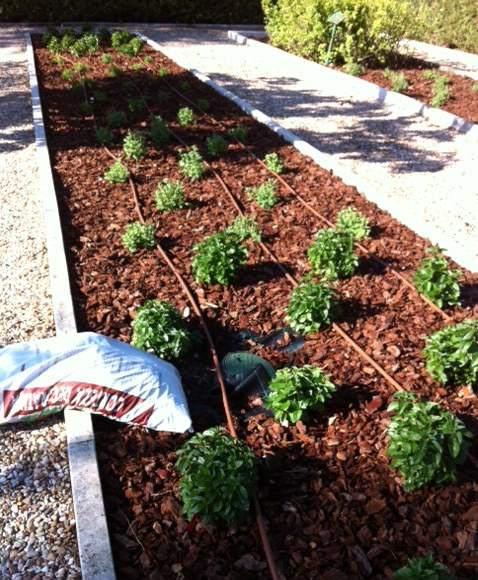 Hidrosyplant construcci n de parques y jardines for Ejemplos de jardines